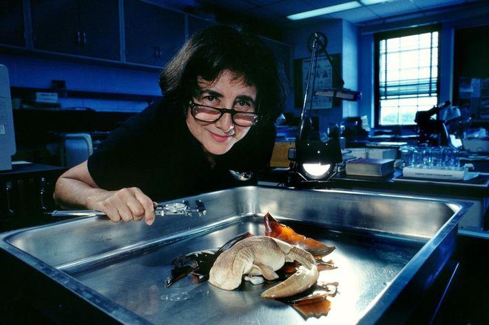 Clark examine un bébé requin-baleine dans son laboratoire.