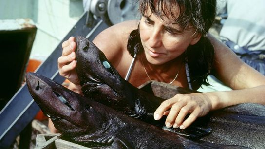 Eugenie Clark examine les requins d'eau profonde de la baie de Suruga, au Japon.