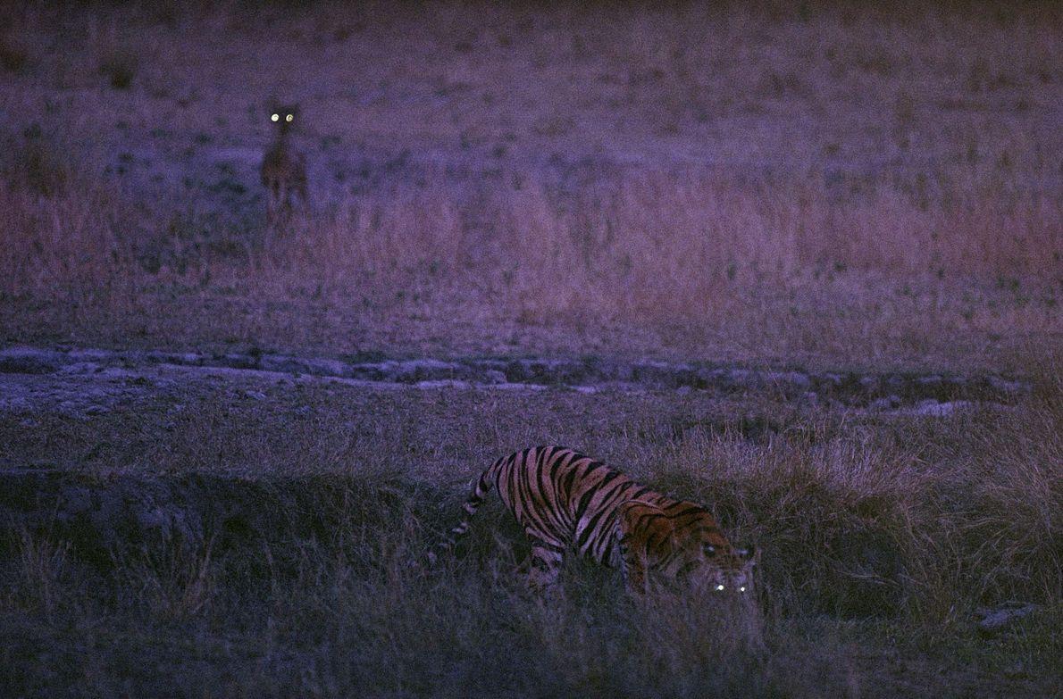 michael-nichols-wild-life-melissa-harris