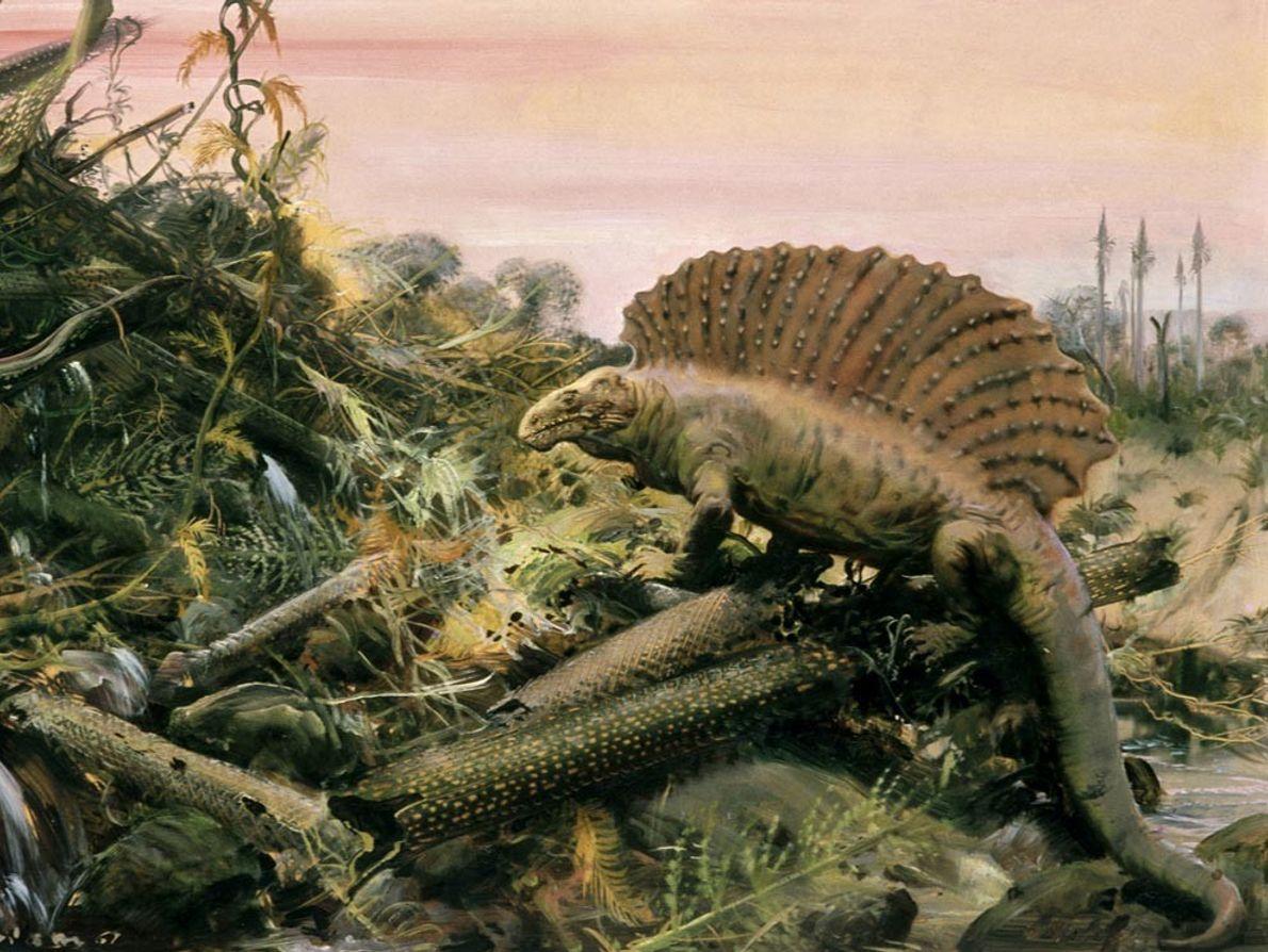 Cette vision d'artiste représente un Edaphausorus doté d'une « voile » dorsale en quête de nourriture. ...