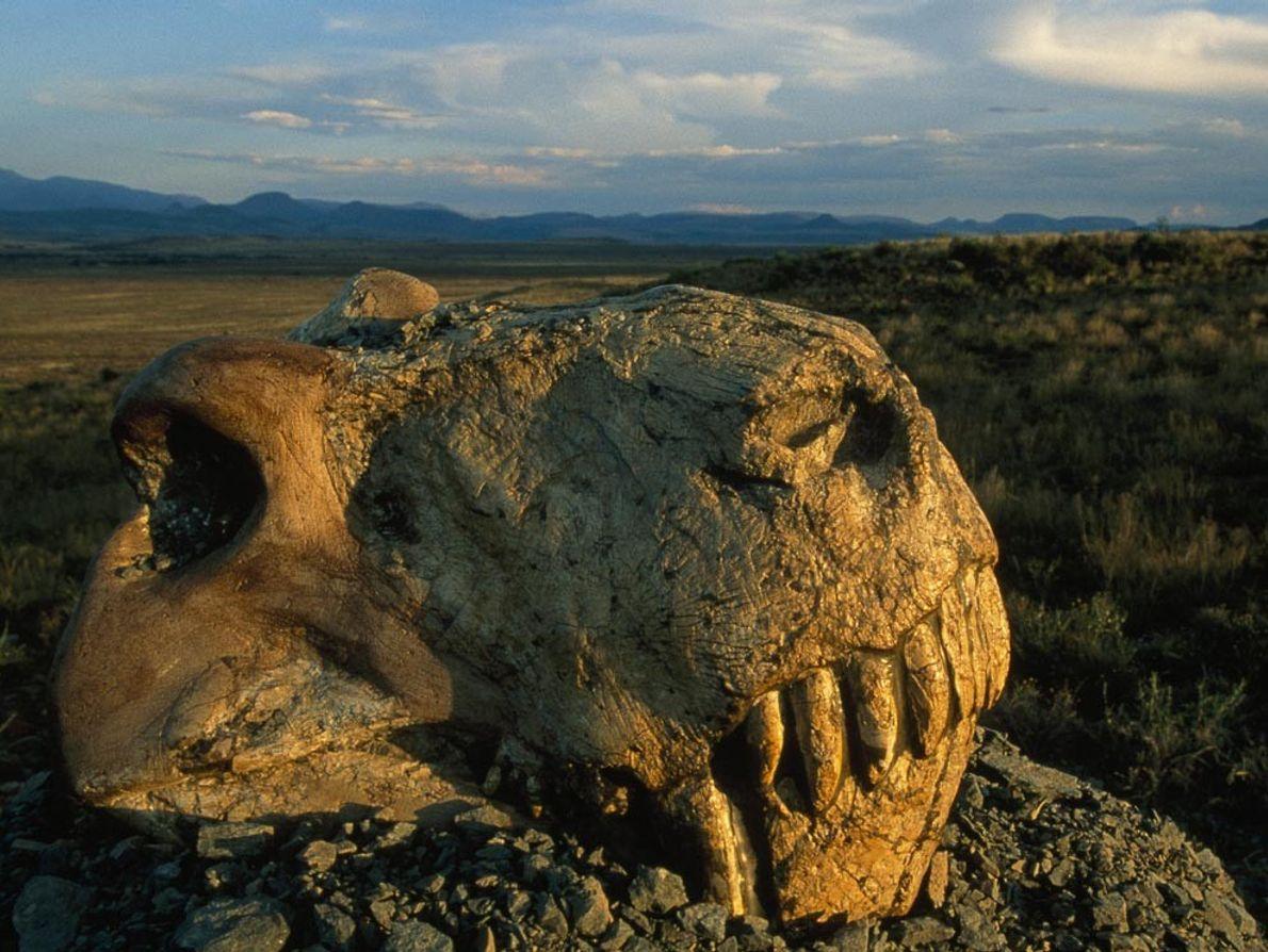 Il y a 250 millions d'années, bien avant que les dinosaures et les mammifères ne fassent ...