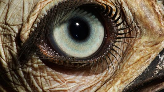 Les yeux, plus belle création de la nature