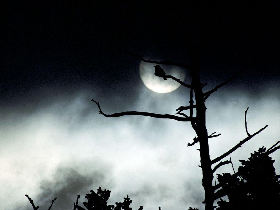 Une pleine lune apparaît à travers une épaisse couverture nuageuse. Elle éclaire la silhouette d'un oiseau, ...
