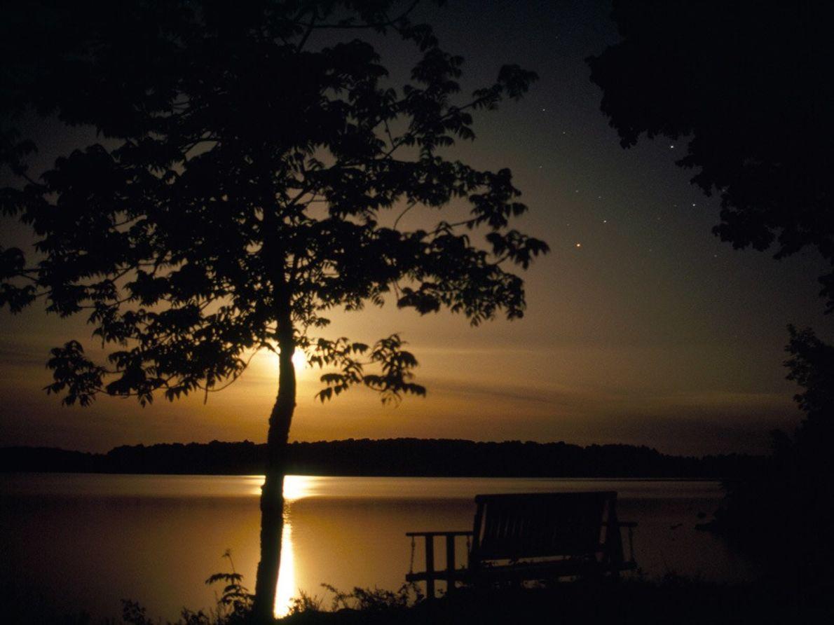 Un arbre du Leech Lake du Minnesota éclairé par la pleine lune.