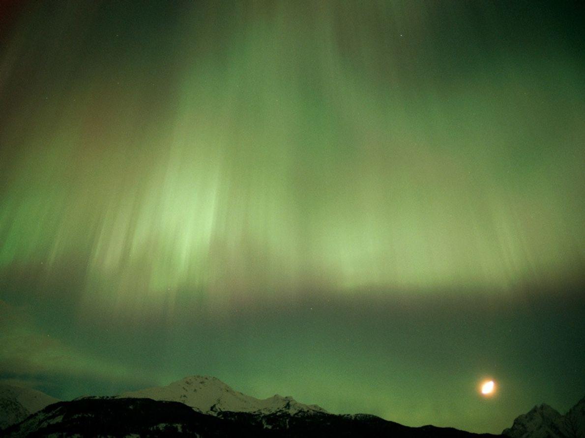 Une aurore boréale teintée de vert tombe en cascade autour d'une lune lumineuse à Churchill dans ...