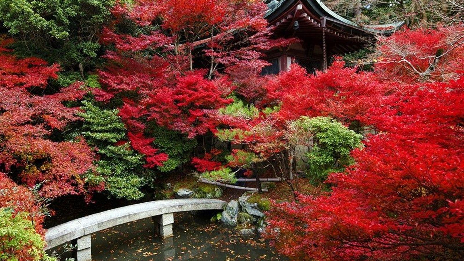 Un temple japonais au milieu des feuillages colorés, à Kyoto.