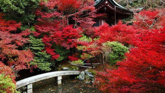 Les 10 plus beaux endroits pour observer les feuilles d'automne