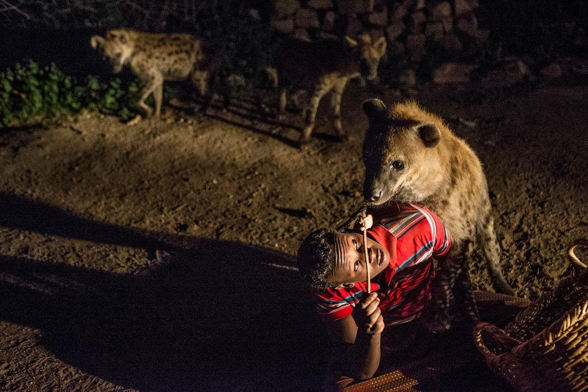 Abbas donne à manger aux hyènes devant chez lui. Outre ses généreuses offrandes, les hyènes se ...