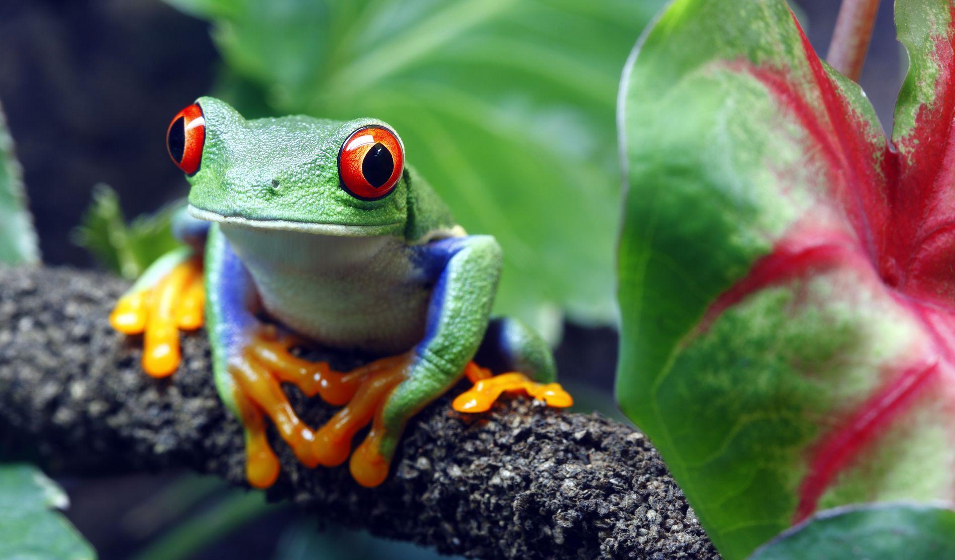 Les scientifiques ont estimé à 90 le nombre d'espèces dans le monde à avoir disparu des ...