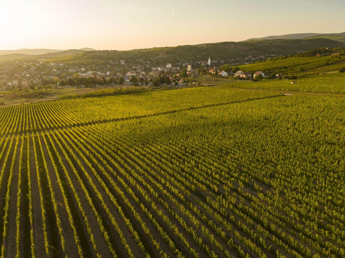 Le village de Mád est entouré des vignobles les plus prisés de Tokaj. La charmante ville ...