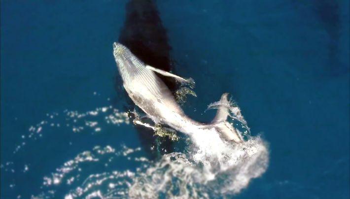 Bande annonce de Le berceau des baleines