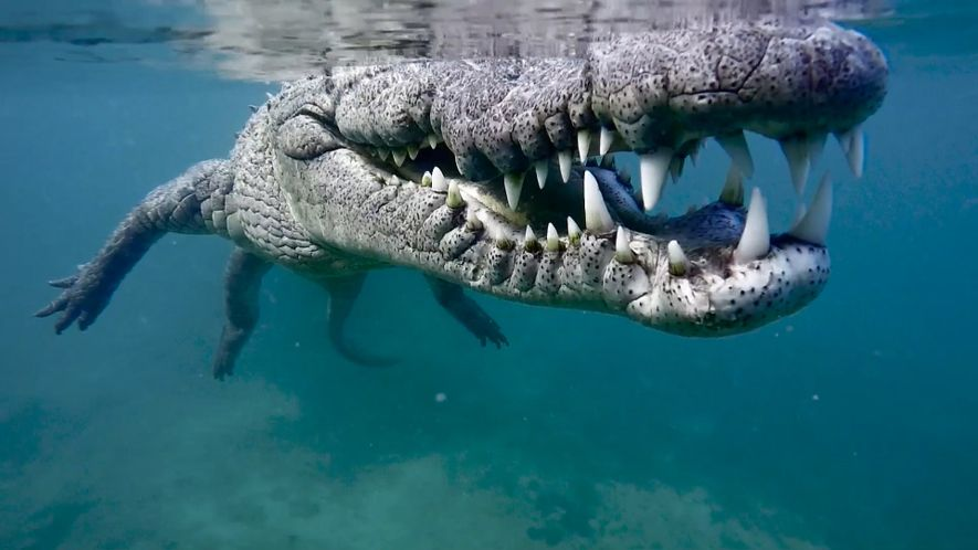 Behind the Scenes of a Close Crocodile Encounter_FR