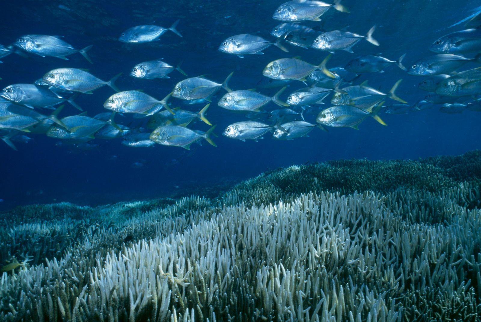 Le réchauffement climatique pourrait condamner les deux tiers de la Grande barrière de corail