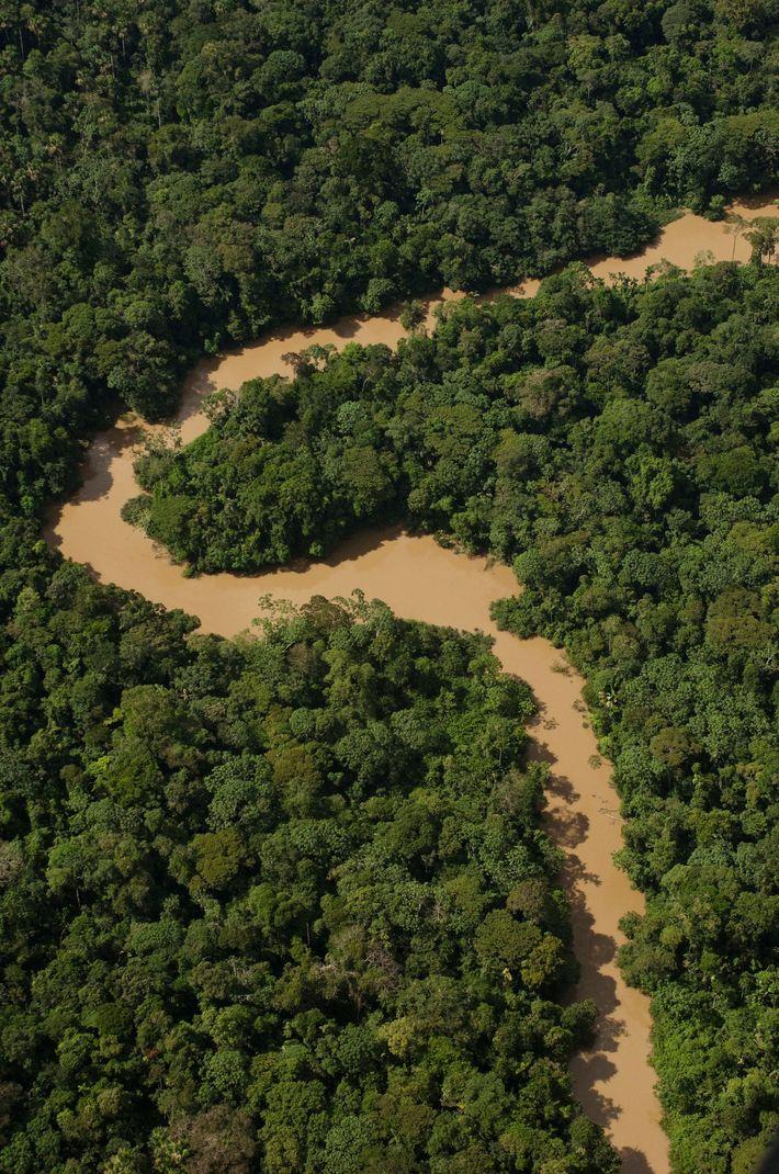 Sur les rives du rio Tiguino, qui serpente à travers le parc Yasuní, vivent de nombreuses ...