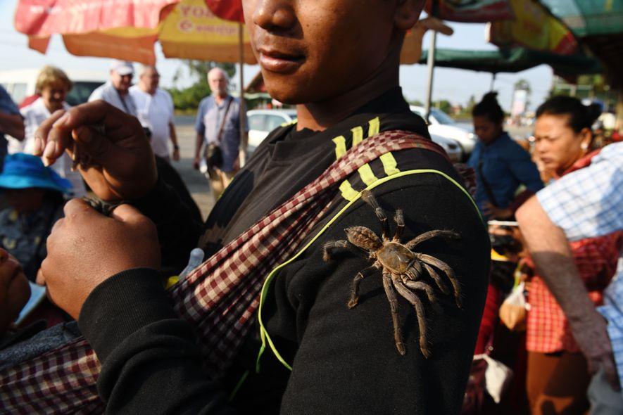 Dans la province de Kampong Cham, le village de Skun est célèbre pour ses dégustations de mygales frites. Mais on peutaussi se laisser tenter par le frisson de sentir l'arachnide vivante (dont on a préalablement couper les chélicères – les dents– venimeuses) galoper sur son bras.