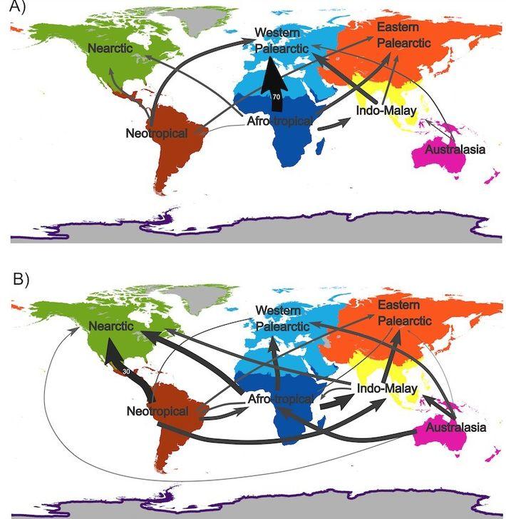 Cette carte représente les flux commerciaux d'oiseaux sauvages entre les différentes régions du globe, avant (A) ...