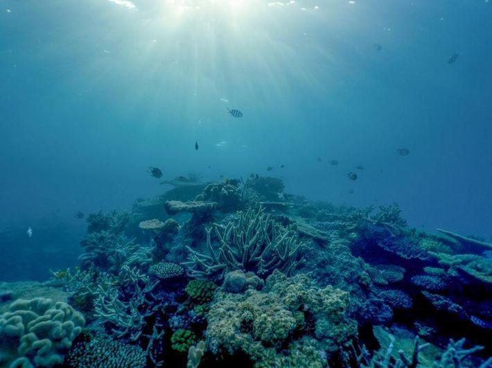 L'après-midi, la lumière se faufile dans le récif Lodestone, sur la Grande Barrière de corail.