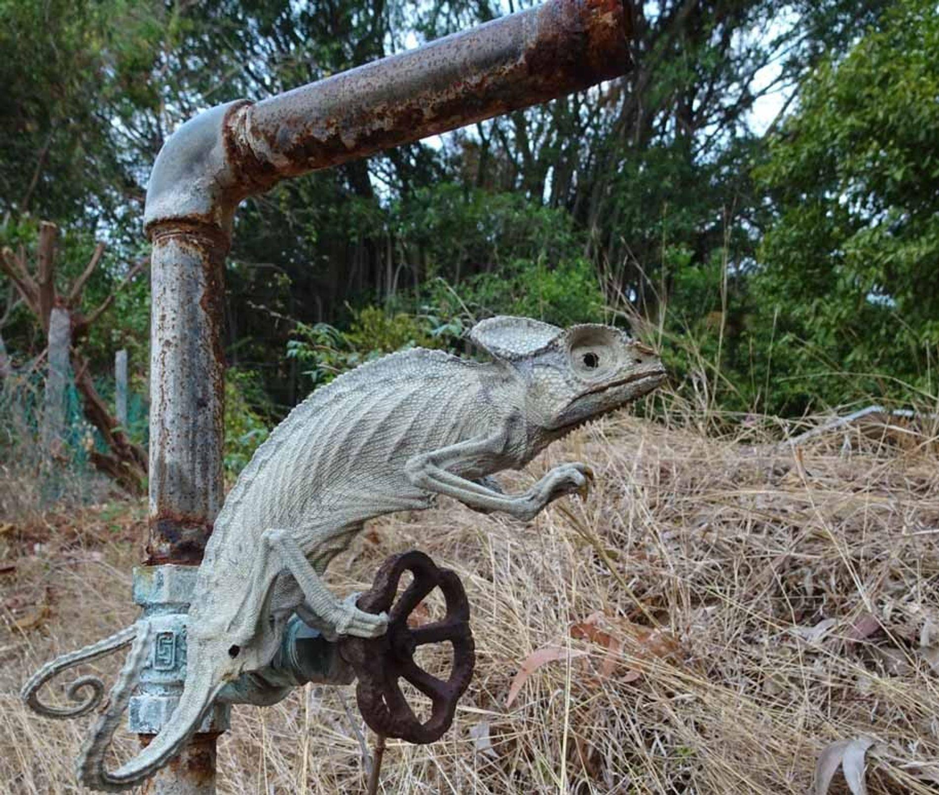 Un caméléon a été retrouvé momifié. Il tentait probablement de s'abreuver à une source tarie.