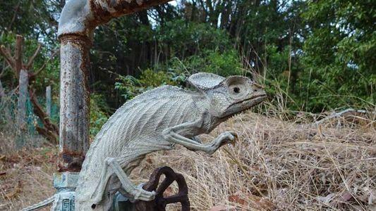 Un caméléon a été retrouvé momifié vivant
