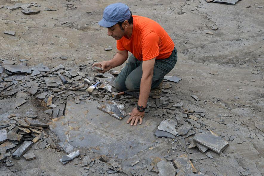 Le géologue Abderrazak El Albani sur le site fossilifère gabonais de Franceville.