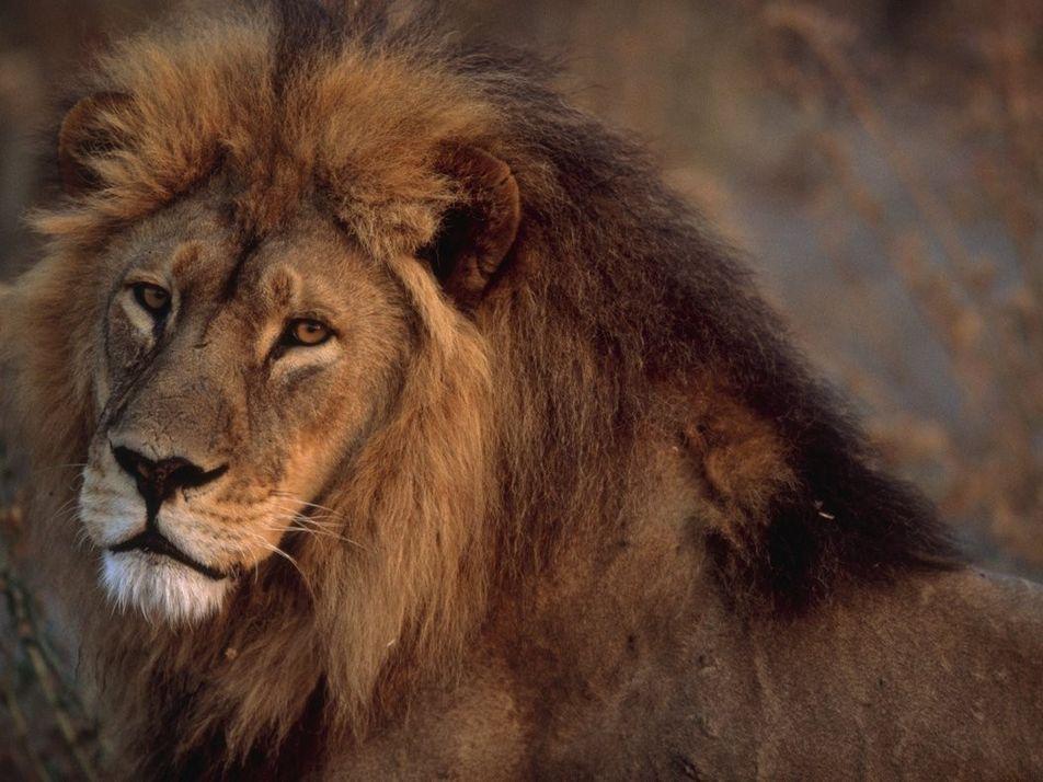 Monde animal : dix ans de bouleversements