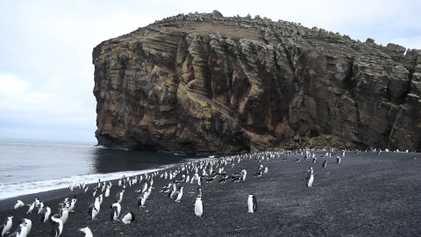 L'île de la déception, le volcan antarctique qui abrite des manchots;