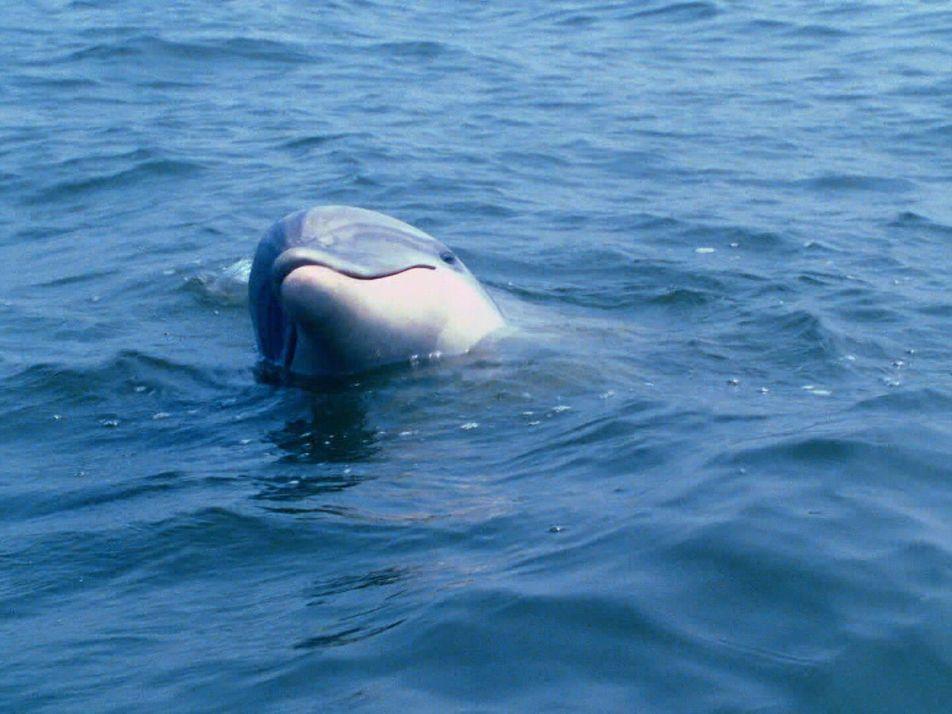 Le langage des dauphins enfin déchiffré