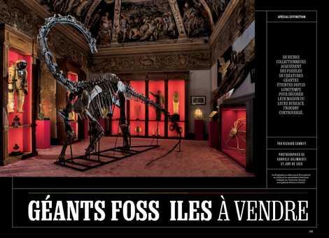 Spécial extinction : Fossiles géants à vendre