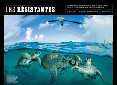 Spécial extinction : Les résistantes