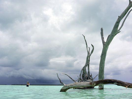 Pacifique Sud : plongée dans l'atoll de Tetiaroa