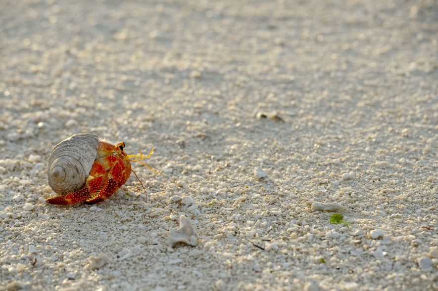Bernard-l'hermite sur la plage…