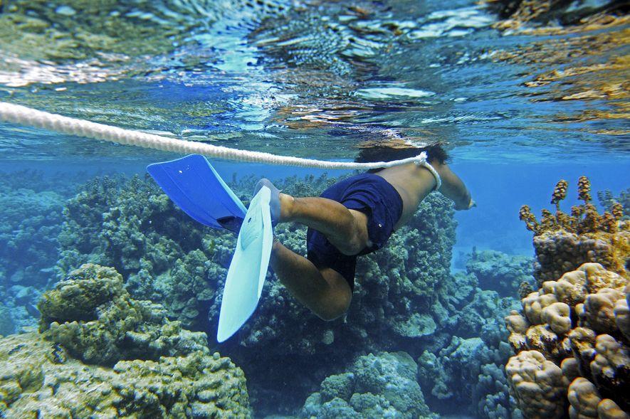 Tihoni, notre guide naturaliste, nous emmène observer la biodiversité de l'atoll. Il porte une corde au ...
