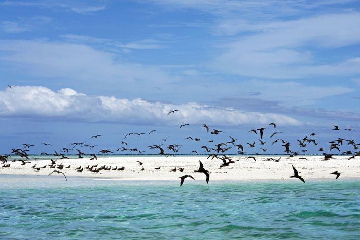Le motu Tahuna Iti (ou « île aux oiseaux ») de l'atoll de Tetiaroa est un ...