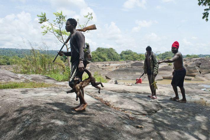 Dans les Abattis-Cottica, des chasseurs arborent fièrement leur prise de la journée: un singe et un ...