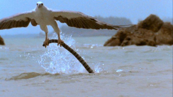 Aigle vs serpent venimeux