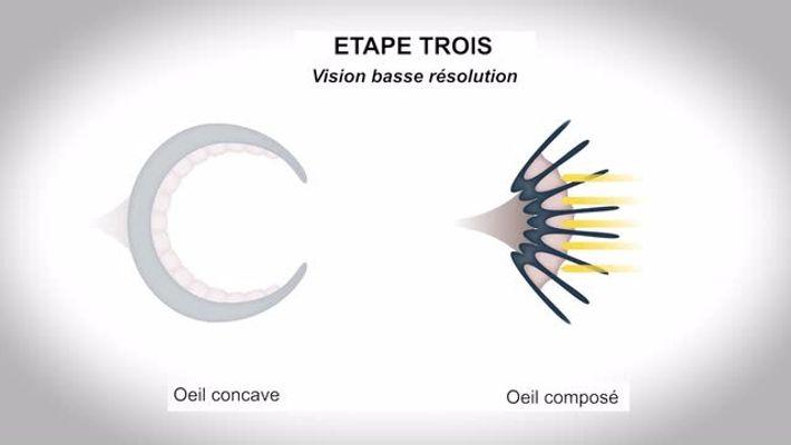 Evolution de l'oeil (National Geographic France)