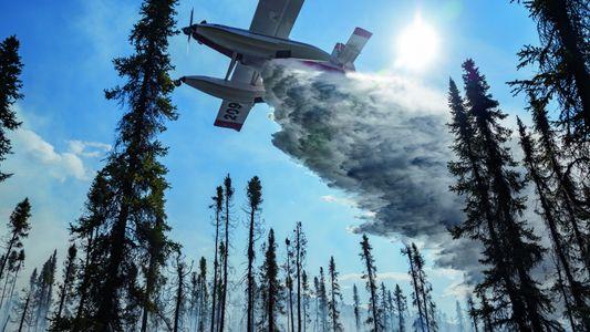 Faut-il laisser les forêts brûler ?