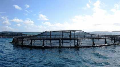 Développer l'aquaculture offshore pour nourrir la planète