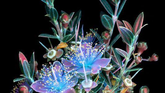 Les merveilleux sujets floraux de Craig Burrows