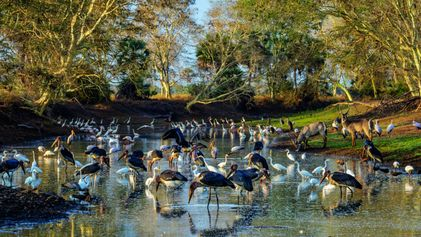 Après la guerre civile, la faune du parc de Gorongosa s'épanouit à nouveau