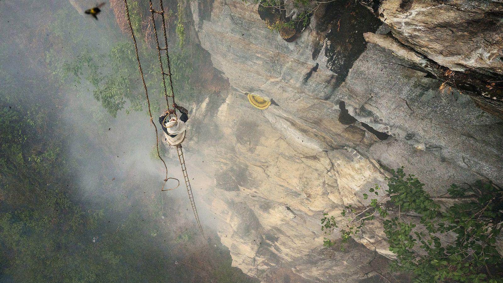 kulung-honey-nepal-ladder-mauli-2