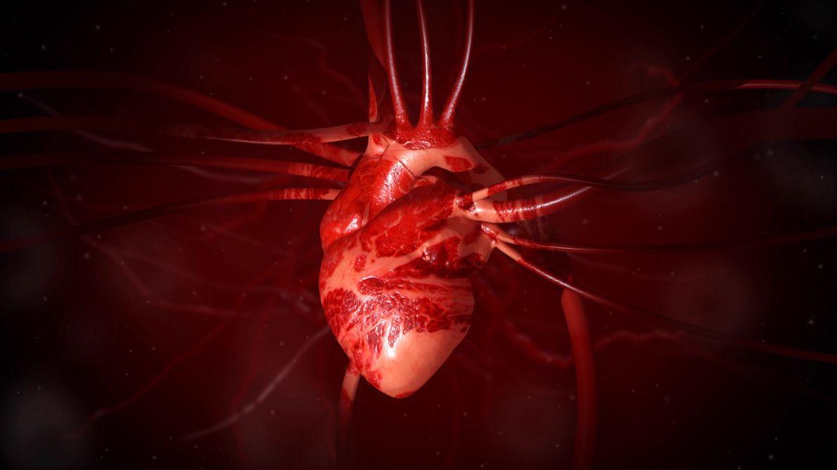 Comprendre : le cœur