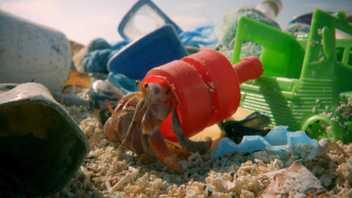 Ces bernard-l'hermites trouvent refuge dans du plastique