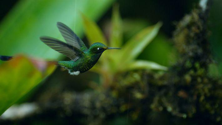 Ce colibri est pris dans une violente tempête