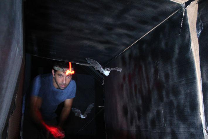 Yossi Yovel a créé ce tunnel de 2 m de long en Israël, en 2014, pour ...