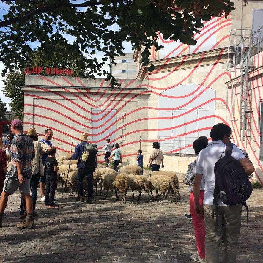 Départ du troupeau des Bergers urbains, qui emprunte la promenade située le long du canal Saint-Denis, ...