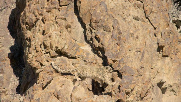 Inde, à la découverte du léopard