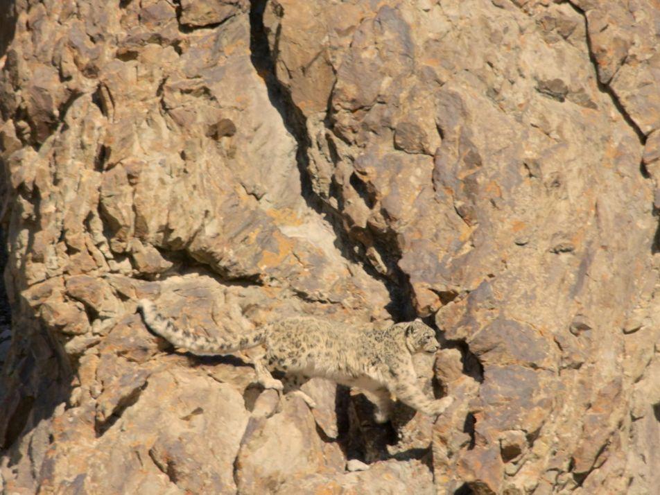 Vidéo : En Inde, à la découverte des léopards