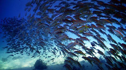 La Journée mondiale de l'océan