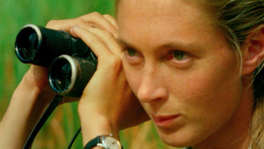 """Trailer officiel """"Jane"""", un documentaire sur la vie de Jane Goodall"""
